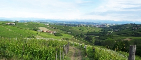 Moscato d'Asti vineyards.