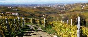Moscato d'Asti vineyards.